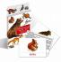 Литература для педагогов ДОУ «Животные наших лесов (карточки)»