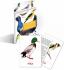 Литература для педагогов ДОУ «Птицы наших лесов (карточки)»